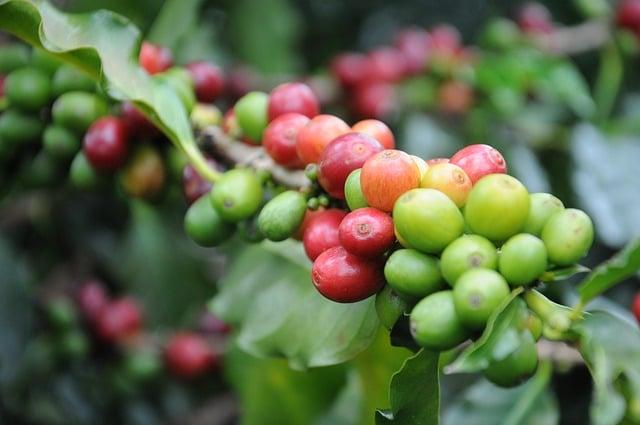 coffee-747604_640