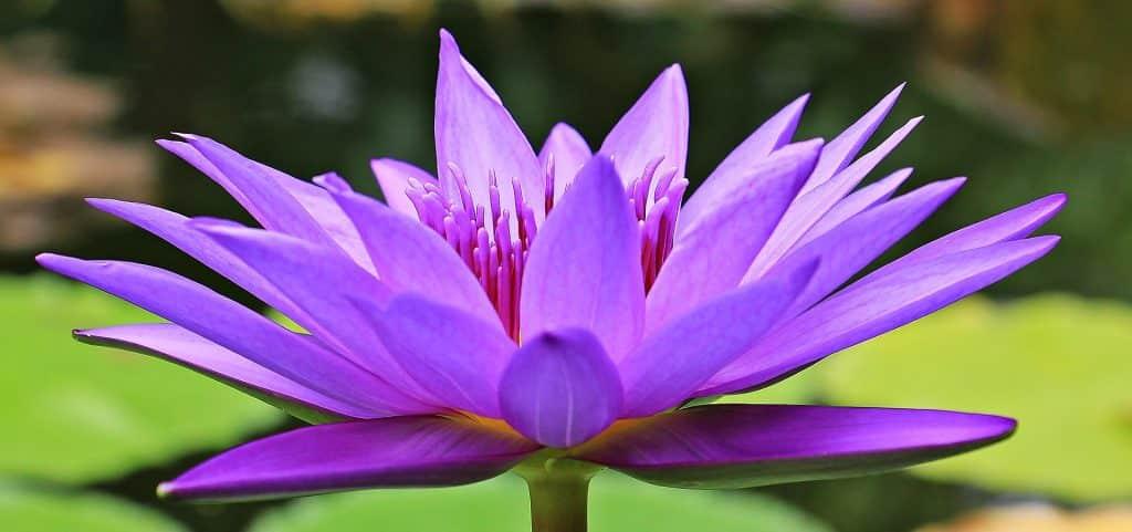 Медитацията е витамин за душата
