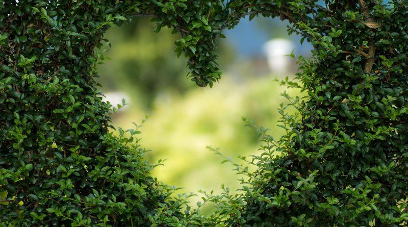 Heart сърце