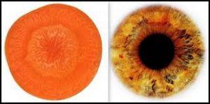 Морков – очи