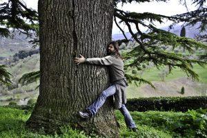 Дендротерапия - лечение и енергийно зареждане от дърветата