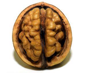Орех – мозък