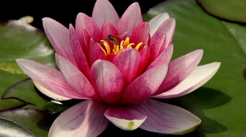 28 безценни мъдрости от Изтока