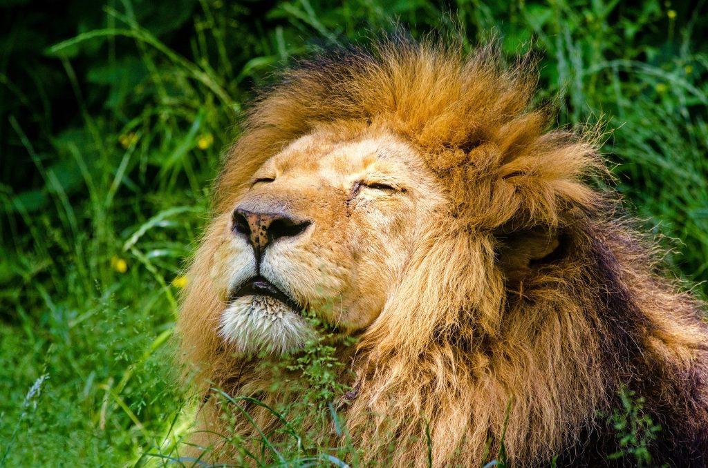 най-голямата зоологическа градина в света