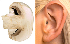 Гъби – слух