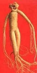 Женшен – човешкото тяло