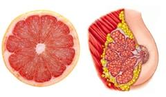 Грейпфрут – гърди